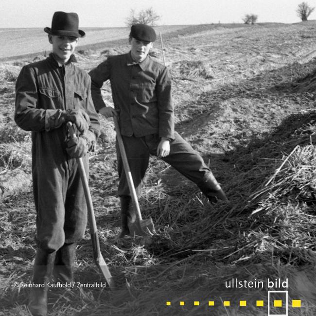 Studenteneinsatz bei Kartoffelernte 1955 - Fotos von Reinhard Kaufhold