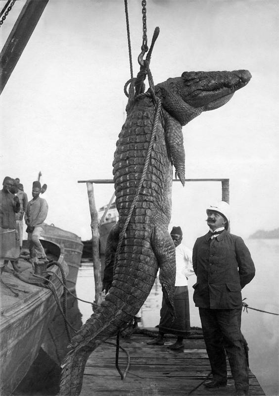 Der Reichstagsabgeordnete Hermann Dietrich mit einem erlegten Krokodil, Deutsch-Ostafrika 1906 © ullstein bild -Otto Haeckel
