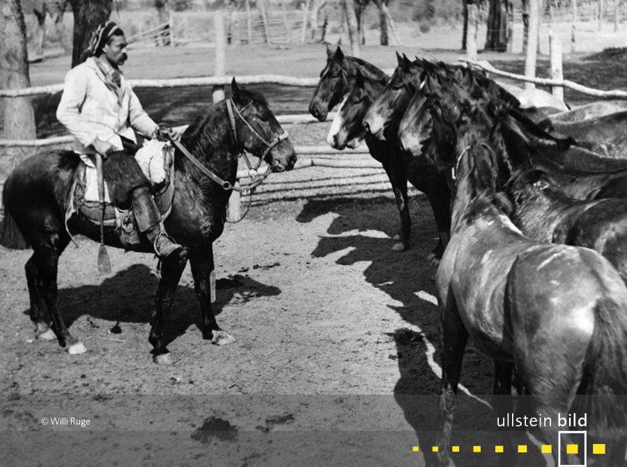 Argentinische Gauchos zähmen Wildpferde (1935)