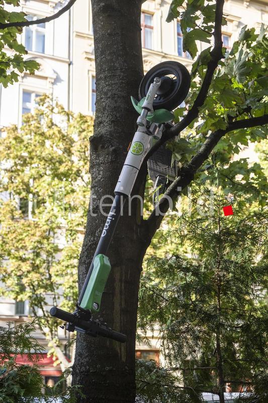 """Neues Fortbewegungsmittel mit kreativem Abstellpotential. Im Baum'geparkter' E-Scooter in Berlin-Prenzlauer Berg."" Foto: snapshot-photography/Seeliger"